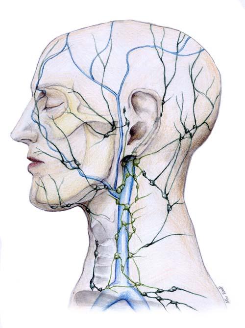 limfna drenaza